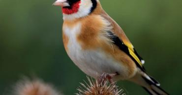 Pic_article_oiseaux_qn7hla