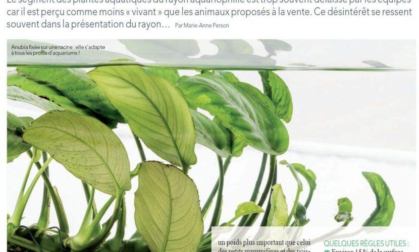 pic-article-plantes-830x835